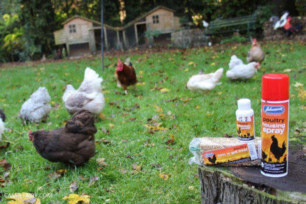 chicken poultry pet health tips products-6