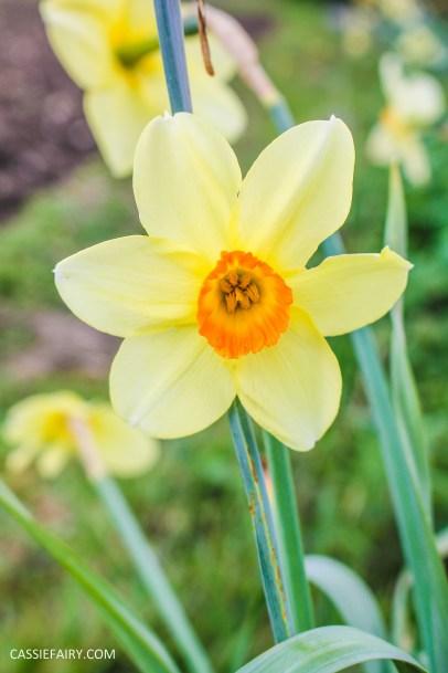day out wild flower walk spring-10