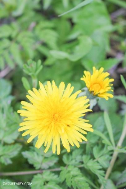 day out wild flower walk spring-9