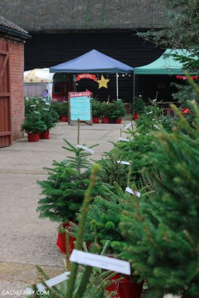 buying local british christmas tree blackthorpe barn suffolk-6