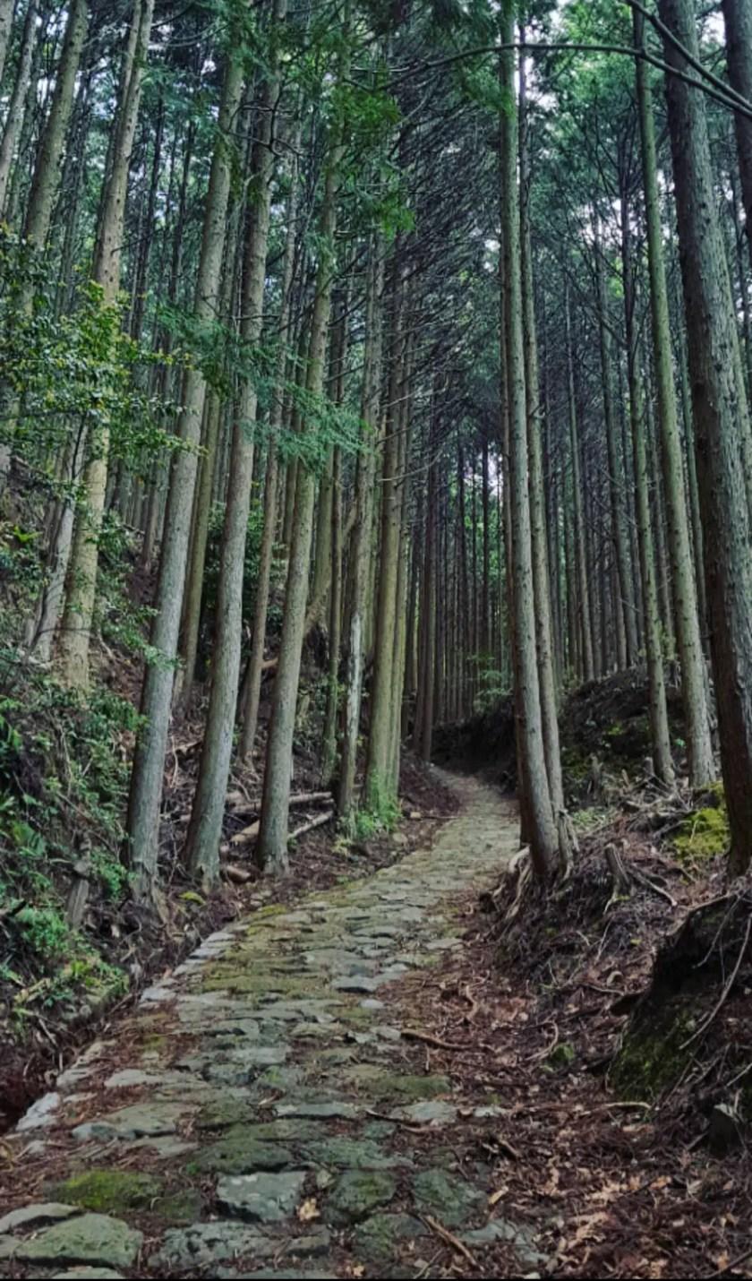 Solo Hiking the Kumano Kodo – 4 day itinerary – Japan's spiritual heartland