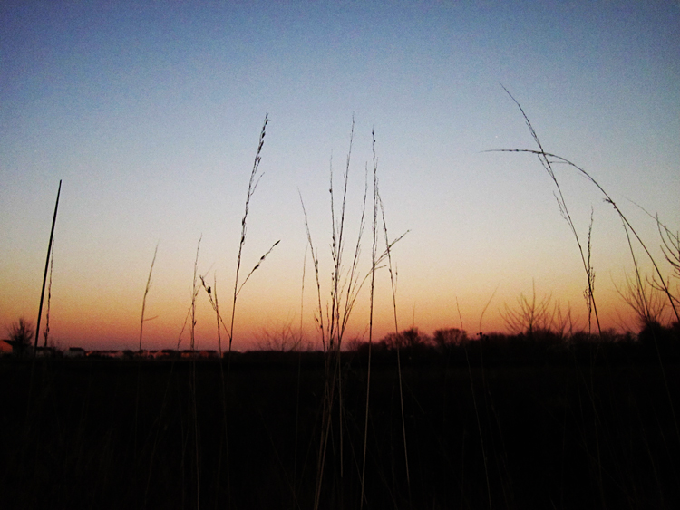Blackberry Trail Sorghastrum nutans indiangrass winter silhouette