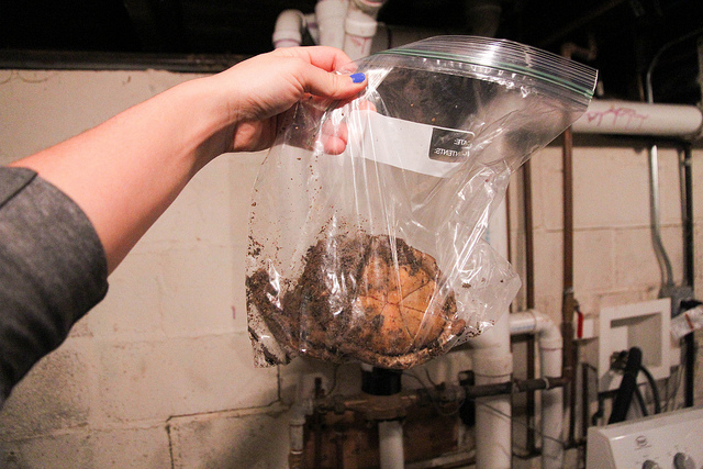 eastern box turtle shell rotten in bag