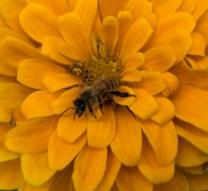 """""""The key to nature's therapy is feeling like a tiny part of it, not a master over it. There's amazing pride in seeing a bee land on a flower you planted - but that's not your act of creation, it's your act of joining in."""" – Victoria Coren Mitchell"""