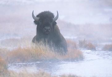Buffalo 60-8-6