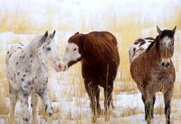 Horse Gossip
