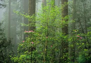 Tree 490-3-9 web