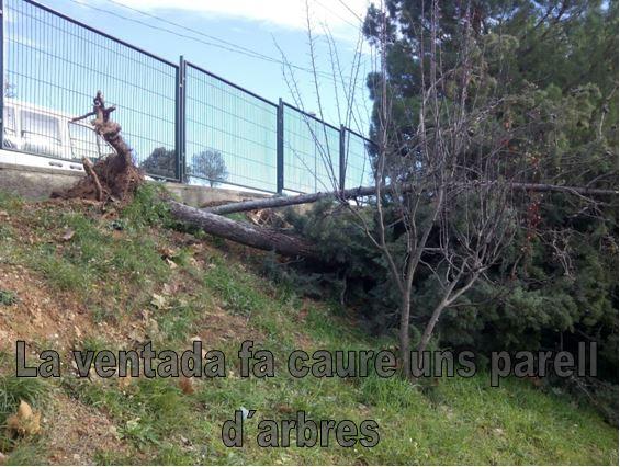 La ventada fa caure dos arbres a Castellbell i el Vilar.
