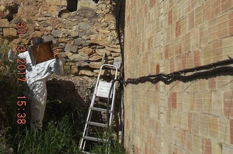 Retiren un eixam d'abelles al Carrer Joaquim Borràs, de Castellbell i el Vilar.