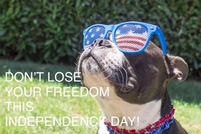 Fourth July dog dui castillo law