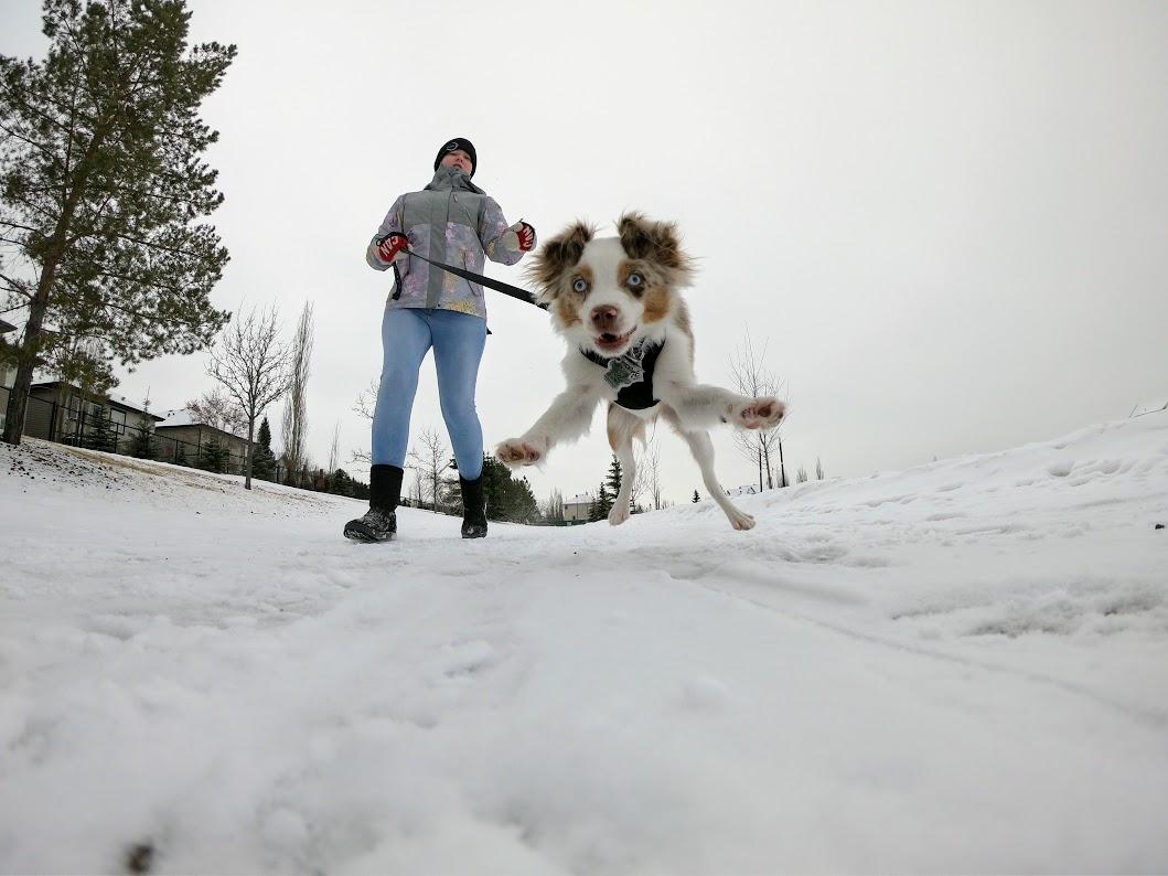 A puppy runs towards the camera on a snowy sidewalk.