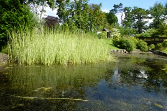 Lauriston Castle July pond