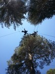 Working at the Ropes Course.