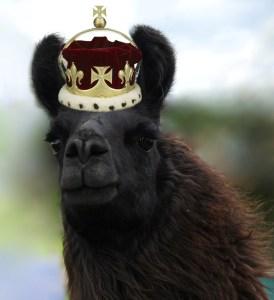 Barack O Llama