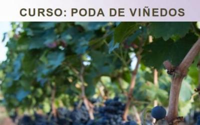 Curso de poda de viñedos