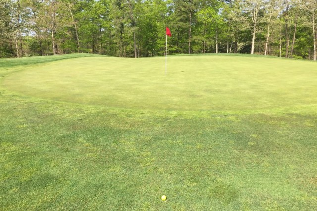 Just off of the Green: Putt or Pitch?