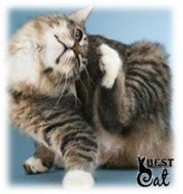 фото-кошки-с-блохами