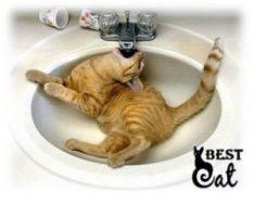 пить-кошка-фото