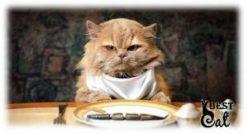 корм-кошке-фото