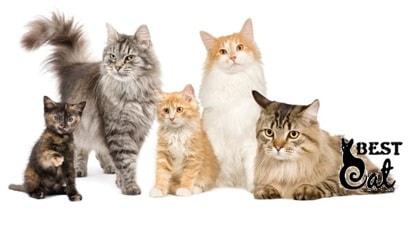кастрированые-коты-фото