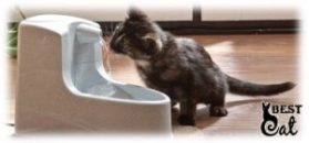 фонтан-для-кошки-фото