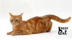 вязка-кошки-фото