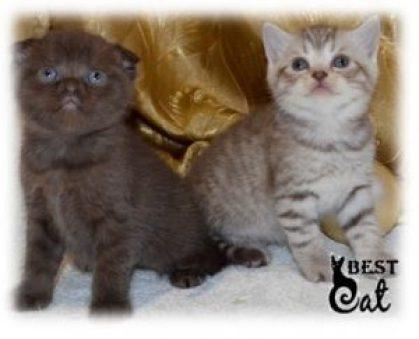 котята-фото