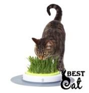 кот-ест-траву-фото