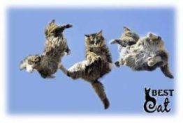 кошки-падают