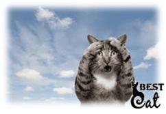 кот-и-кошка-фото