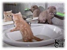 котята-в-ванной
