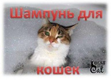 шампунь-для-кошки-фото