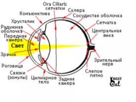 сетчатка -глаза-фото
