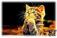 украшения-кот-фото