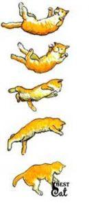 кошка-падает