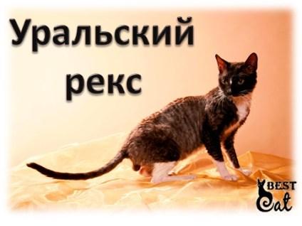 Уральский рекс