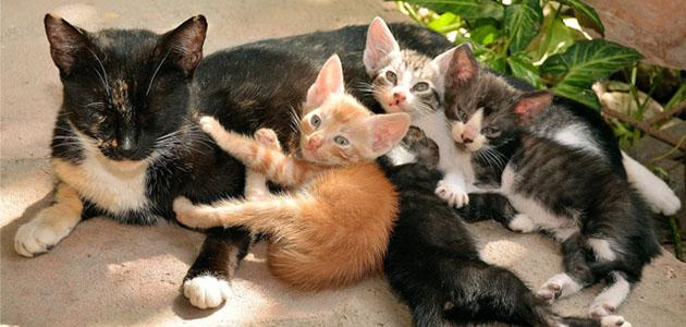 モグニャンは子猫に食べさせてもいい?与える量はどれぐらい?
