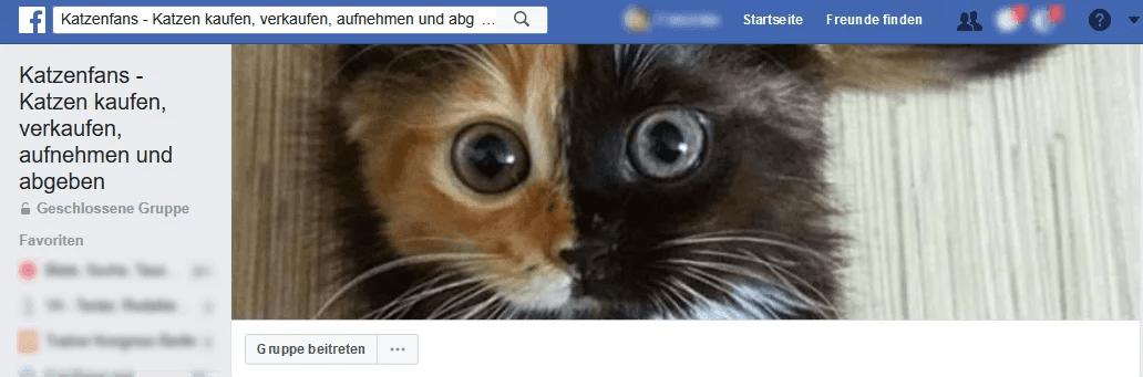 Du Willst Eine Katze Kaufen Mit Dieser Anleitung Findest Du