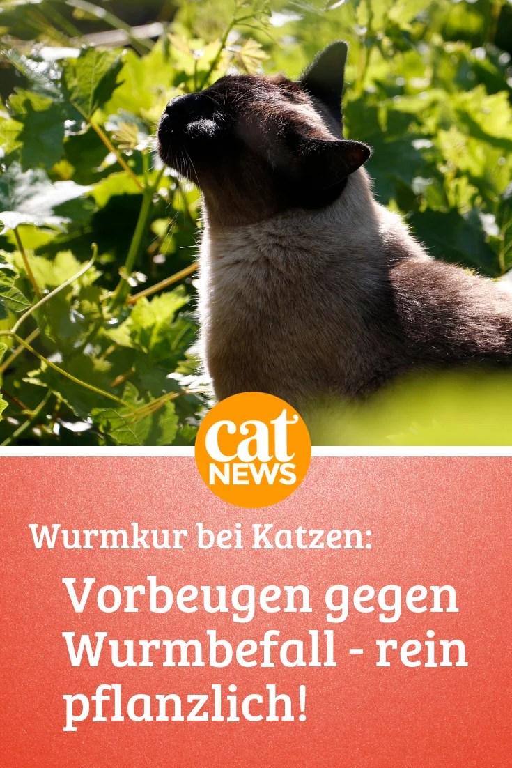 Wurmkur Bei Katzen Was Viele Tierärzte Leider Verschweigen