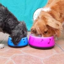 platos para perros lima peru cat-oh pet shop