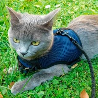 pechera arnes para gatos ferplast