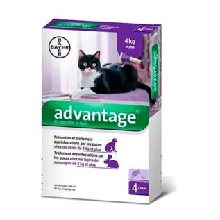 pipeta advantage gatos 4-8kg peru lima miraflores
