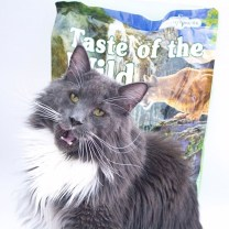 gato con comida para gatos taste of the time rocky mountain