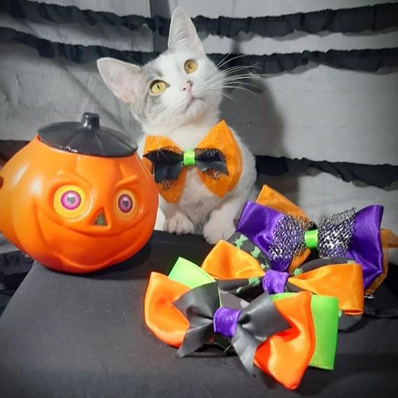 lazos para gatos halloween en lima peru miraflores