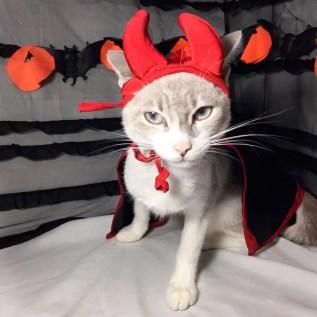 disfraz para gato halloween lima peru miraflores