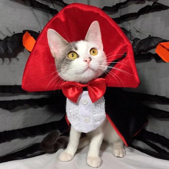 disfraz para gatos conde dracula en Lima Peru Miraflores