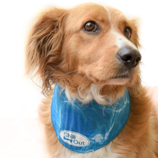 cool mat bandana refrescante para perros en miraflores lima peru