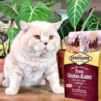 carnilove comida premium para gatos en miraflores lima peru