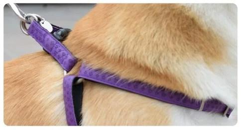 perro raza corgi con arnes para perros en pet shop cat-oh