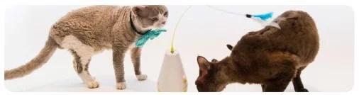 juguete interactivo inteligente para gatos en cat-oh pet shop miraflores online